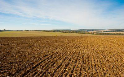 Fallow Land